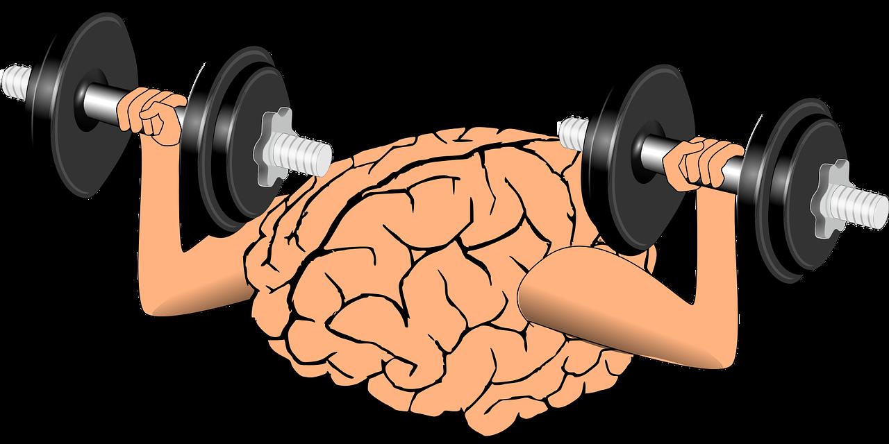 Brain 1295128 1280