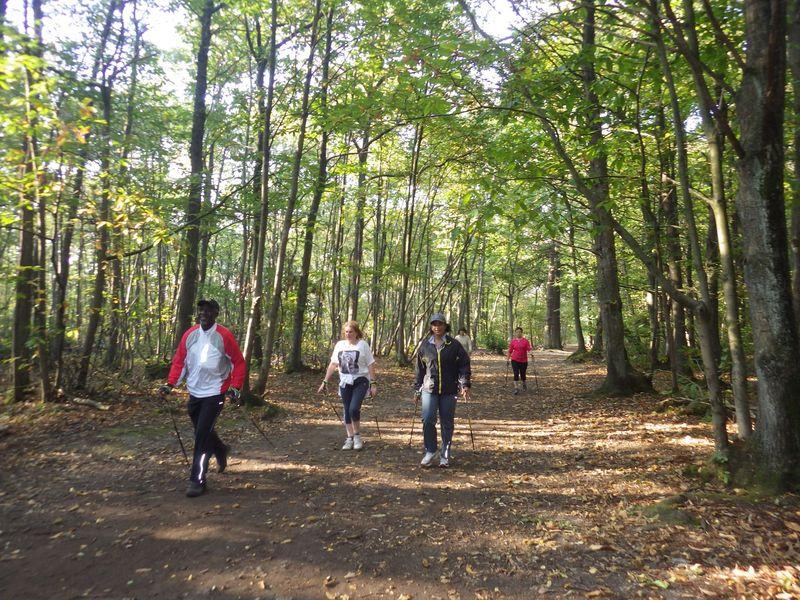 En forêt de Meudon